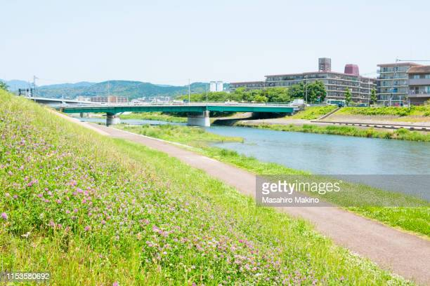early summer view of kamo river, kyoto city - water's edge stock pictures, royalty-free photos & images