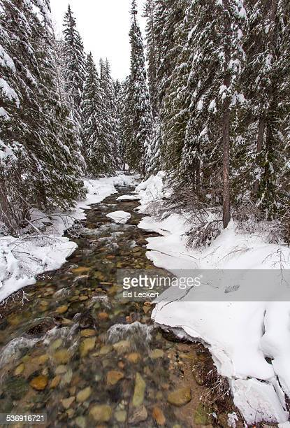 early winters creek in the winter - leckert stock pictures, royalty-free photos & images