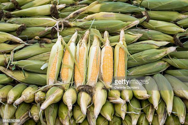 """ears of corn for sale at the market - """"danielle donders"""" stock pictures, royalty-free photos & images"""