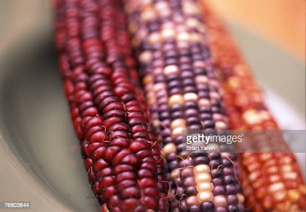 ears of indian corn - indian corn stock photos and pictures