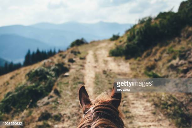 ears of the brown horse in front of the mountain landscape - front view photos et images de collection