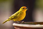 Earth canary
