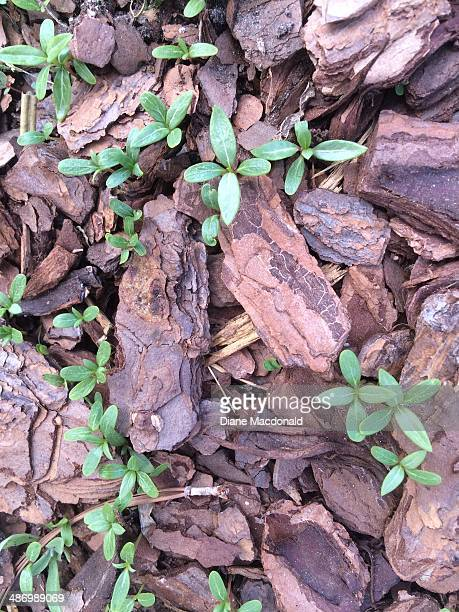 earth day challenge - mulch stock pictures, royalty-free photos & images