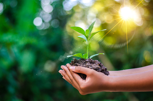 Earth Day In the hands of trees growing seedlings. Bokeh green Background Female hand holding tree on nature field grass Forest conservation concept 949173492