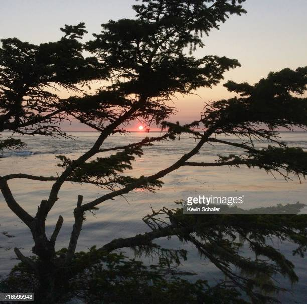 earth day - cape flattery stock photos and pictures