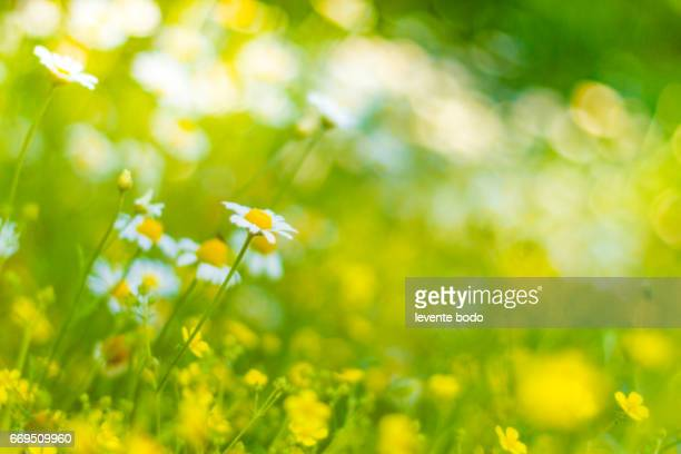 earth energy, summer landscape, health care, website design, white design, blue banner, weather, tropical flowers, vibrant colors, inspirational images, ecology water, horizontal lines, summer holiday, go green concept, morning glory, natural beauty, - 青々とした ストックフォトと画像