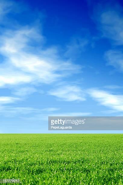 earth & sky: grass