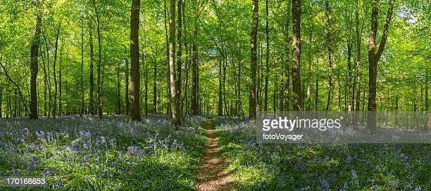 Erde trail durch idyllische bluebell woods grünen Sommer Wald-panorama