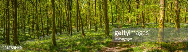earth trail through idyllic green forest foliage wilderness woods panorama - national recreation area stock pictures, royalty-free photos & images