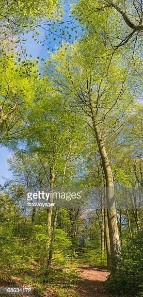 Earth trail through idyllic summer forest canopy banner
