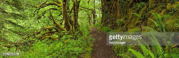 earth trail through lush green rainforest wilderness panorama - mt hood national forest stock pictures, royalty-free photos & images