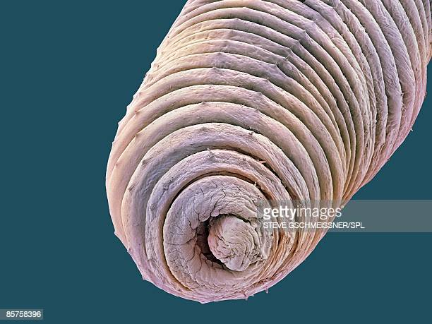 Earthworm, close-up