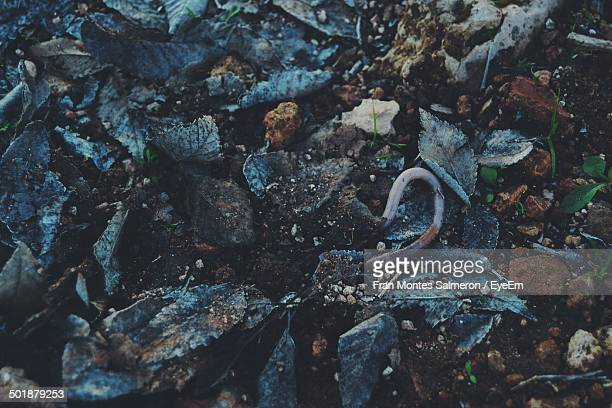 earthworm in forest - earthworm stock pictures, royalty-free photos & images