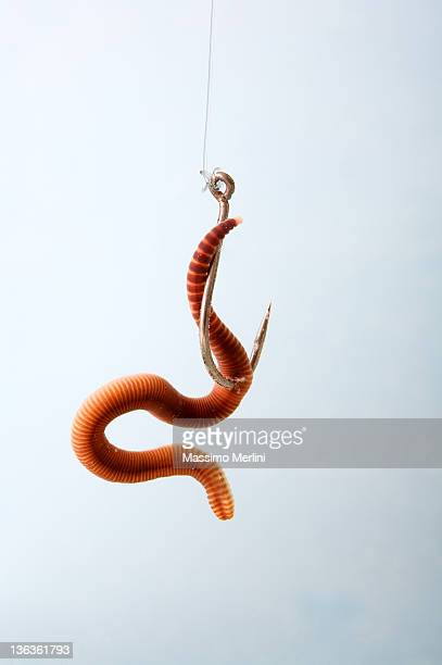 earthworm - worm stock photos and pictures