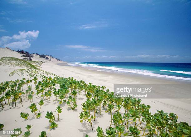 east coast of ilha do bazaruto - mozambique stock pictures, royalty-free photos & images