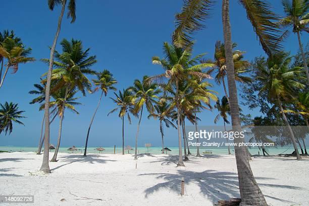 east coast of zanzibar island - zanzibar stock pictures, royalty-free photos & images