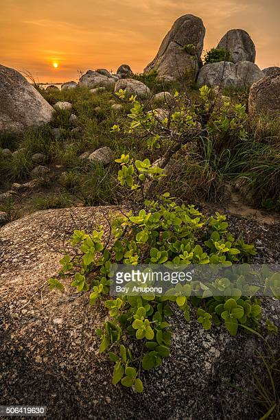 East Woody Island of Nhulunbuy, Australia.