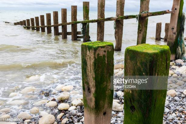 eastbourne beach - pebble stock pictures, royalty-free photos & images