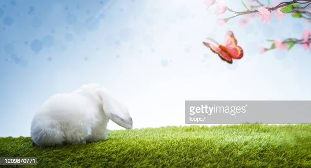 easter bunny and butterfly - italian easter stock pictures, royalty-free photos & images