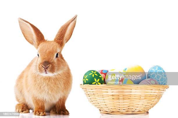 Coelhinho da Páscoa e Ovos
