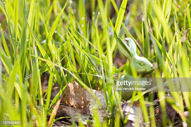 Easter bunny hidden in long grass