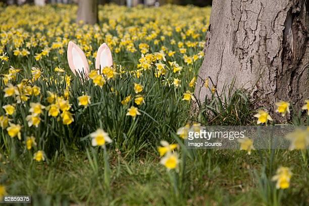 easter bunny hiding behind daffodils - osterhase stock-fotos und bilder