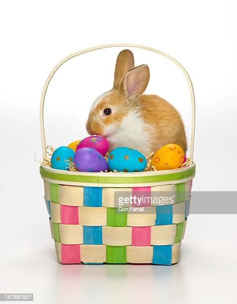 Easter bunny in a basket with coloured eggs