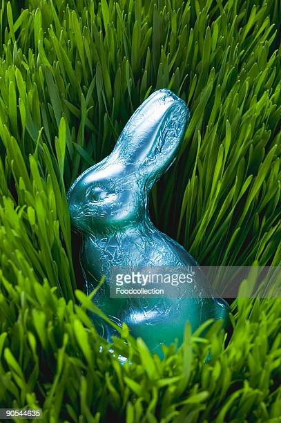 Easter Bunny in grass, close up