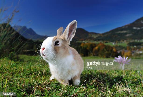 easter bunny - easter bunny stock pictures, royalty-free photos & images