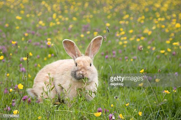easter bunny - april stock pictures, royalty-free photos & images