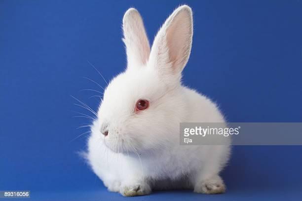 coniglietto di pasqua - coniglietto foto e immagini stock