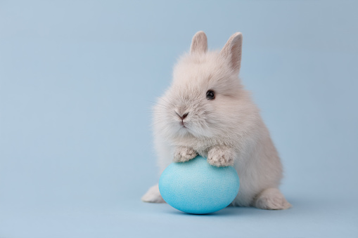 Easter bunny with egg on blue background 924464156