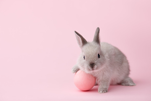 Easter bunny with egg on pink background 925407716