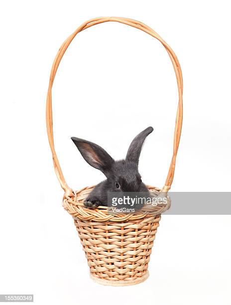 easter bunny with eggs in basket - easter basket stock pictures, royalty-free photos & images