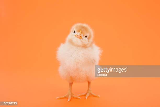 Easter Chick with Cute Expression