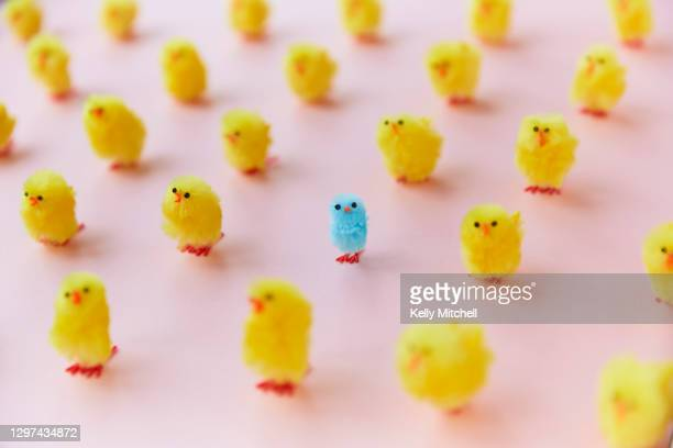 easter chickens in a grid on pink background - standing out from the crowd stock pictures, royalty-free photos & images