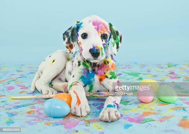 easter dalmatain puppy - dog easter stock pictures, royalty-free photos & images