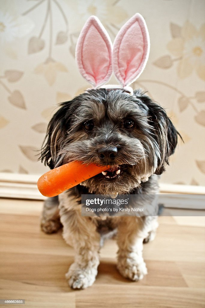 Easter Dog : Stock Photo