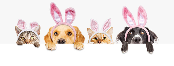 Easter Dogs and Cats Over Web Banner 930286828