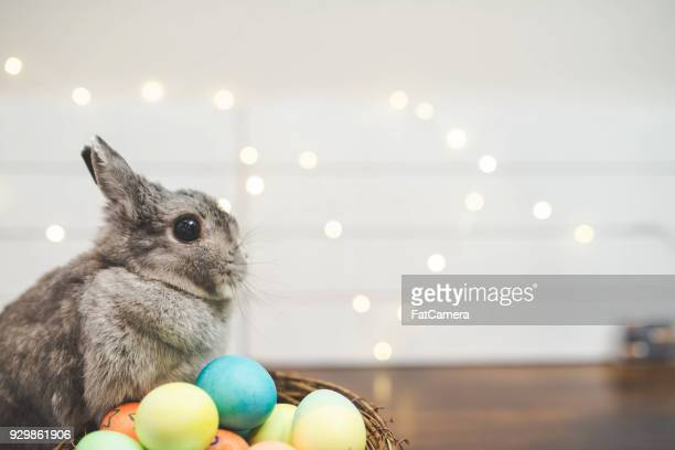 easter egg guard rabbit - easter basket stock photos and pictures
