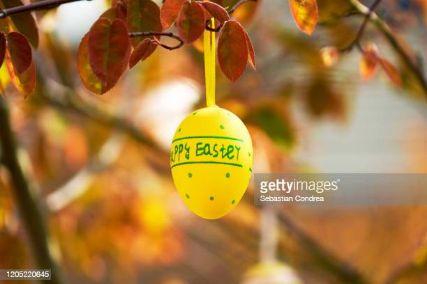 easter egg hanging on a tree branch, color sunny spring day. - easter sunday stock pictures, royalty-free photos & images