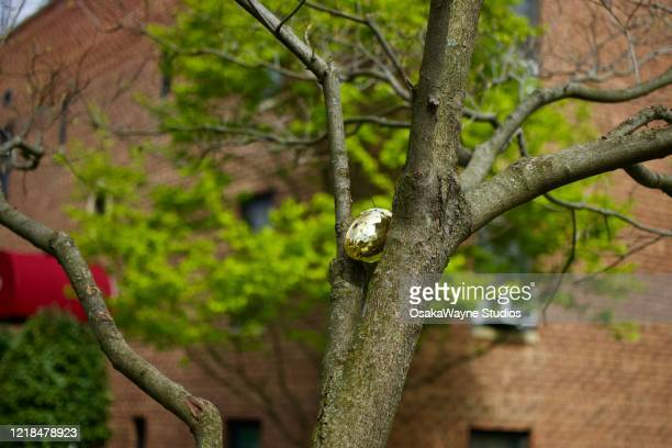 easter egg hunt - mamaroneck stock pictures, royalty-free photos & images