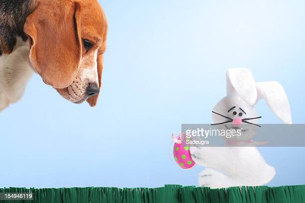 easter egg hunter - dead dog stock pictures, royalty-free photos & images