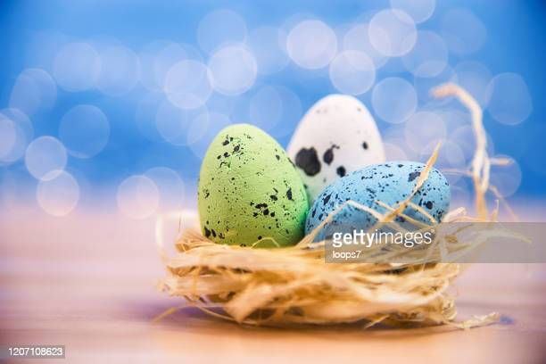 easter eggs in bird nest - italian easter stock pictures, royalty-free photos & images
