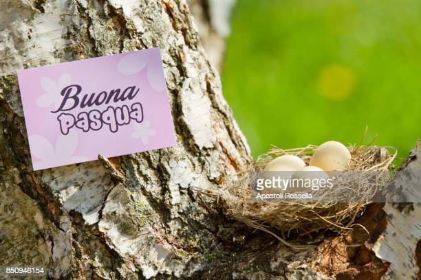 easter eggs in the nest - happy easter in italian stock pictures, royalty-free photos & images
