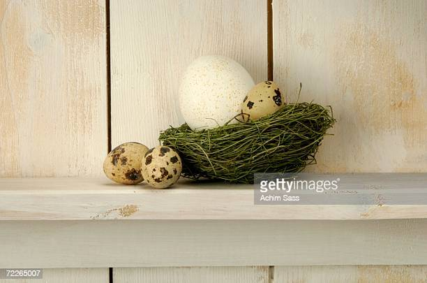 Easter eggs lying on nest at shelf, close-up
