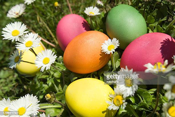 easter eggs on a meadow