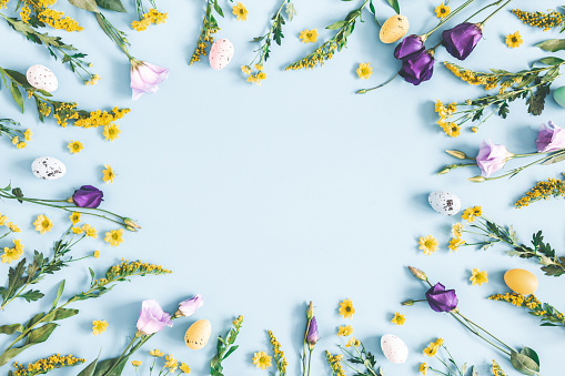 Easter eggs, purple and yellow flowers on pastel blue background. Spring, easter concept. Flat lay, top view, copy space 1130756001