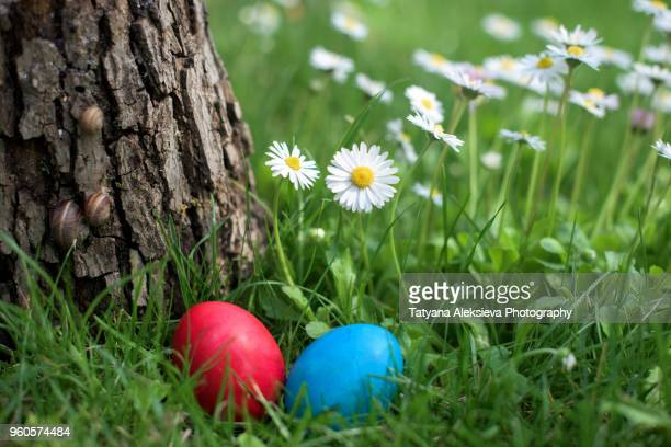 easter hen egg hunt - easter flowers stock pictures, royalty-free photos & images