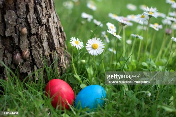 easter hen egg hunt - osterei stock-fotos und bilder